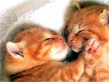 gatti, bacio, coccole, abbraccio