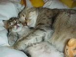 abbraccio, cartoline gatti, amore, mamma, cuccioli, cartoline affetto naturale
