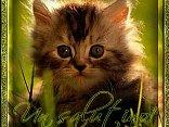 saluto, amichevole, guardare, controllare, vista, gatto, occhi, sguardo, intensi, attimi