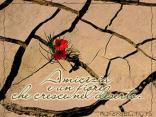 fiore, cresce deserto, di rocce, roccie, sabbia, caldio, escursione, termica, uccide, vita, non l'amicizia profonda