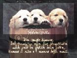 cartoline amici, lottare, sorriso, amici, giusto, felicit� , affetto, invio, immagine, desktop cani, sfondo, logo cani, botte