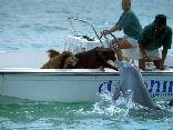 bacio, scafo, cane, delfino, animali, diversi, becco, squame, pelo, rumore, verso