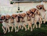 cane, cani, cuccioli, divertenti, appesi, filo dei panni, panni sporchi