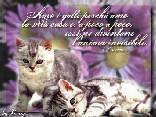 amare, anima, gatti, casa, gatto, invisibile, insensibile, paravento, cinico, affetto, carica, positiva, positività