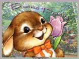 cartoline pasqua, coniglio, augurare, orecchie cucciolo, gioia, sorriso, fiore, mms, sfondo cellulare pasqua