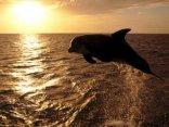 delfino, libero, mare aperto, nuotare, pesci