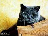 Micio arguto furbo lente monocolo