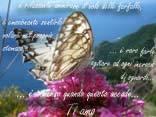cartoline farfalle, amore, sentimento piacevole, farfalle nello stomaco, agitare, sentire stretta, groppo, amore cartoline amore