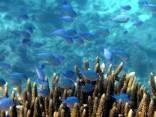 fondale, marino, mare, pesci, corallo, costiera, corallina