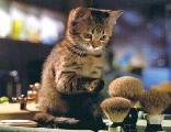 gatto, zampetta, curioso, cucciolo