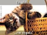 gatto, cesta, cesto, cesti, gatti, girato, girata, rovescio, dorso, schiena, schienare, schienata, simpatico