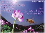 per fare prato, basta, sogno, api, poche, voglia, immaginare, immaginazione, creare, mentale