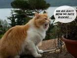 gatto, pallino, sbadiglio, risata, provocazione, panorama, micio