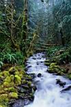 alberi, alti, fusti, liane, liana, muschio, unidità, unido, ambiente, fresco, freddo, minerale, minerali, sorgenti, sorgente
