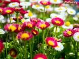fiori, prati, piante, colori, sbocciare, pollini, api