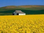 fiorire, correre, casetta, isolata, distesa, distendersi, tranquillit�, vita, rurale, no, stress, cittadino, valori, ritorno, contadino, contadin