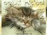 ciao, saluto, cartolina saluto, gatto, sfondo, mms, wap, logo, scaricare, inviare, email, mail, e-mail