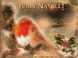 uccellino, simbolo, inverno, freddo, clima natale, paese, contrada, amore, colori, luci, addobbi